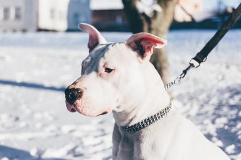 Das Melanom beim Hund