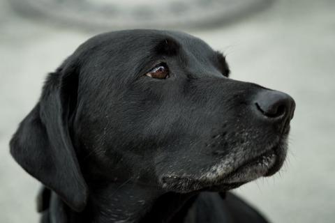 Das Osteosarkom beim Hund