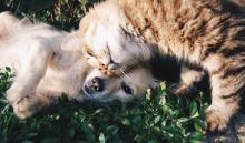 hund-katze-hoeren